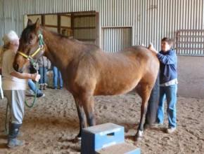 saddle fit3